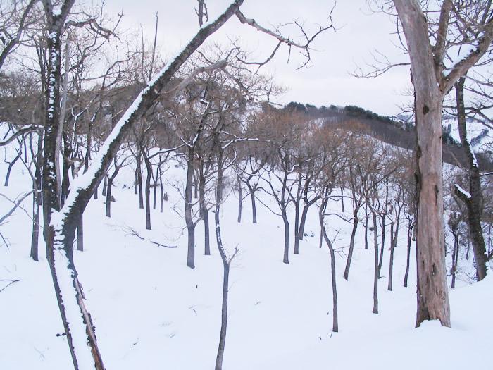 桐林 冬71